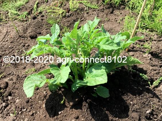 f:id:agri-connect:20200605230958j:plain