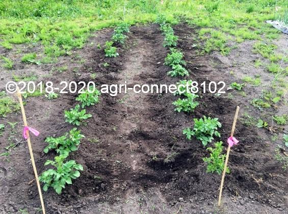 f:id:agri-connect:20200605231535j:plain