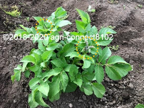 f:id:agri-connect:20200605231547j:plain