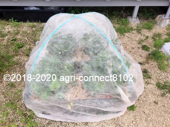 f:id:agri-connect:20200609230228j:plain