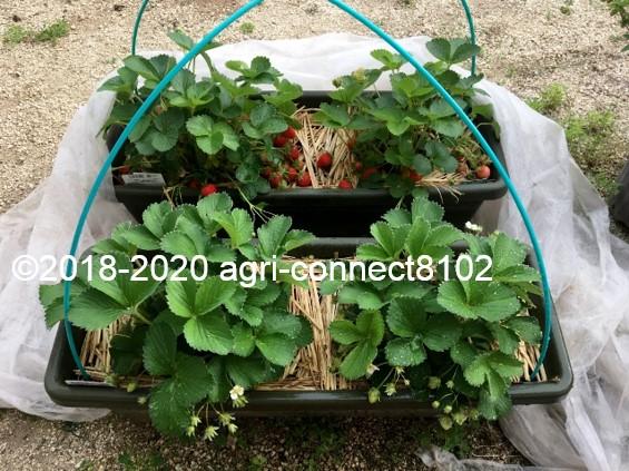 f:id:agri-connect:20200609230316j:plain
