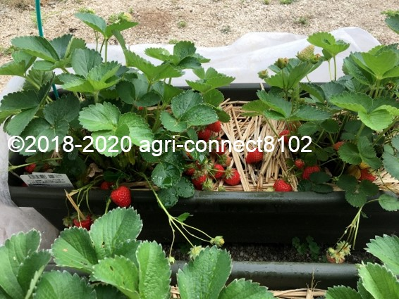 f:id:agri-connect:20200609230320j:plain
