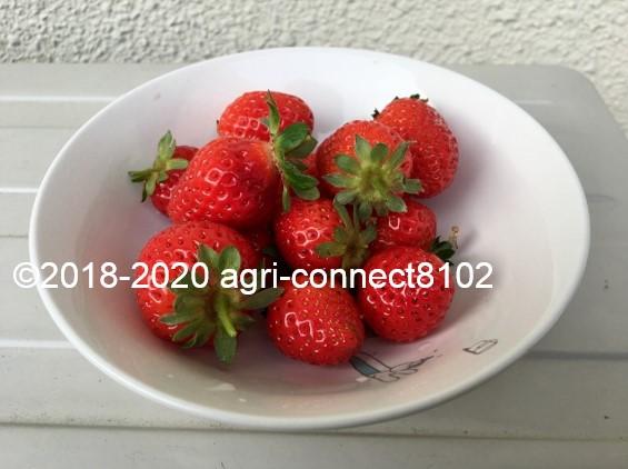 f:id:agri-connect:20200609230322j:plain