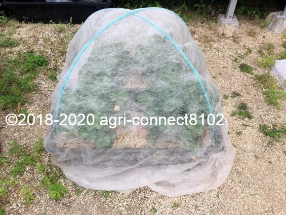 f:id:agri-connect:20200609230510j:plain