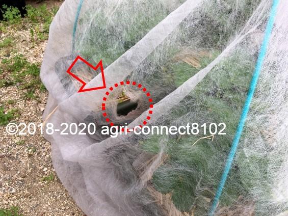 f:id:agri-connect:20200609230513j:plain
