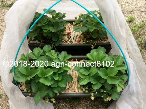 f:id:agri-connect:20200609230519j:plain