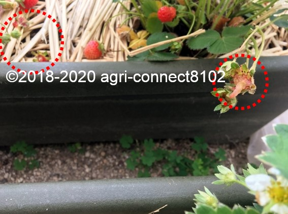 f:id:agri-connect:20200609230524j:plain