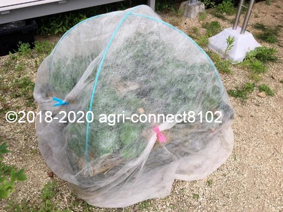 f:id:agri-connect:20200609230905j:plain