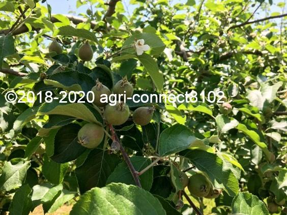 f:id:agri-connect:20200611232120j:plain