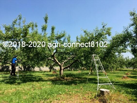 f:id:agri-connect:20200611232151j:plain