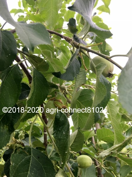 f:id:agri-connect:20200611232442j:plain
