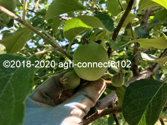 f:id:agri-connect:20200612092830j:plain