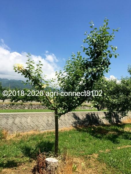 f:id:agri-connect:20200614150807j:plain