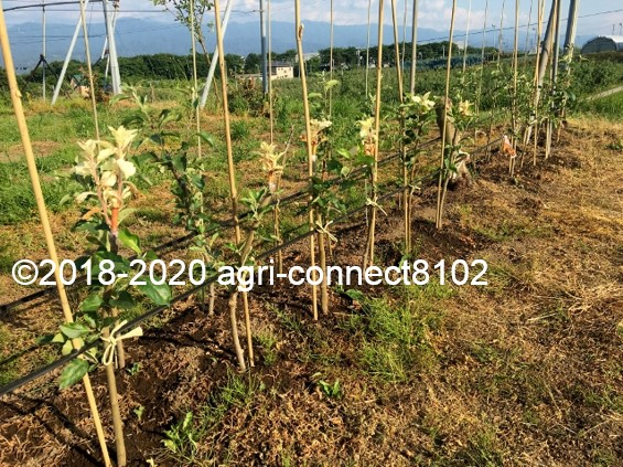 f:id:agri-connect:20200614150820j:plain