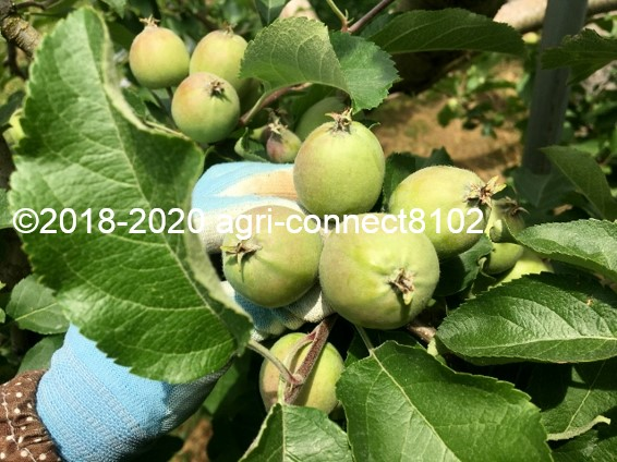 f:id:agri-connect:20200619215604j:plain