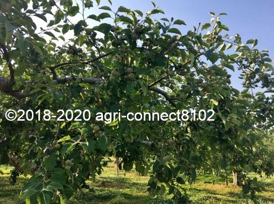 f:id:agri-connect:20200619215607j:plain