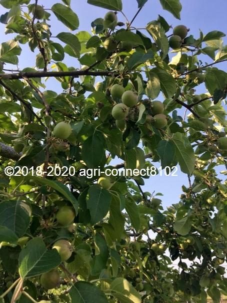 f:id:agri-connect:20200619215609j:plain