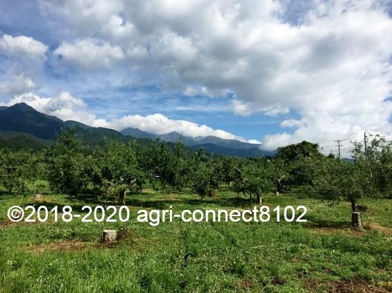 f:id:agri-connect:20200619220118j:plain