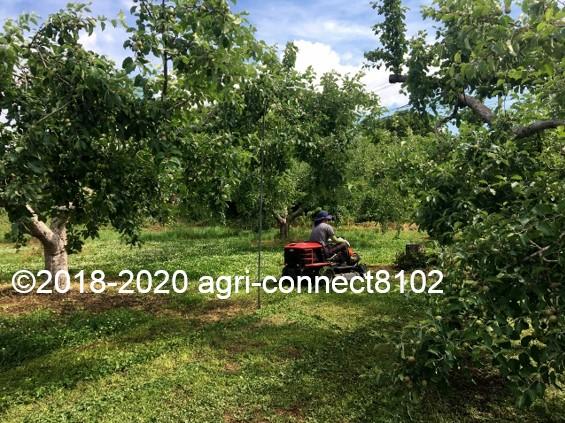 f:id:agri-connect:20200619221655j:plain