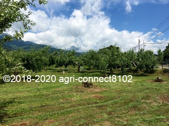 f:id:agri-connect:20200619221701j:plain