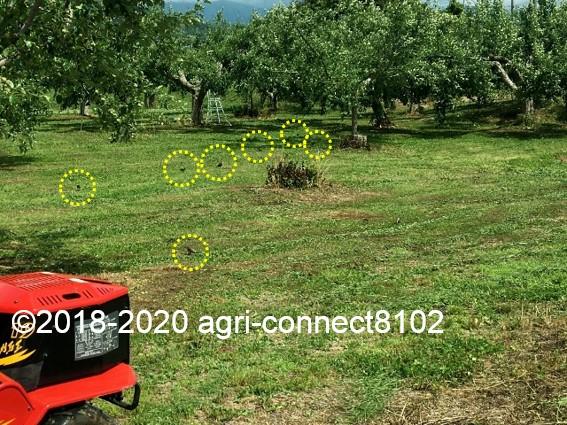 f:id:agri-connect:20200619222200j:plain