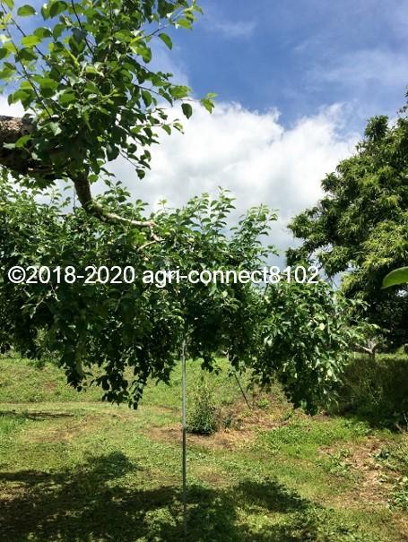 f:id:agri-connect:20200619222541j:plain