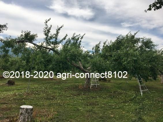 f:id:agri-connect:20200619222725j:plain