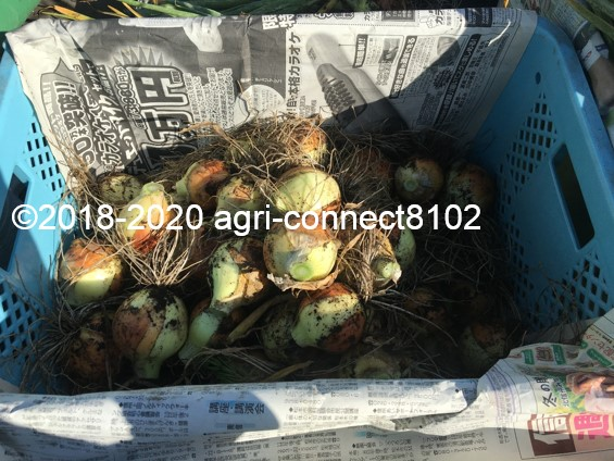 f:id:agri-connect:20200624223546j:plain