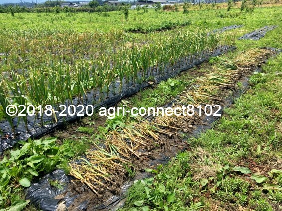 f:id:agri-connect:20200628212755j:plain