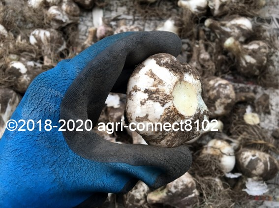 f:id:agri-connect:20200628213825j:plain