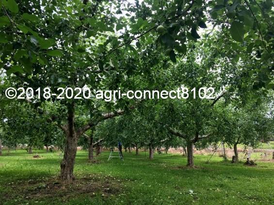 f:id:agri-connect:20200701092752j:plain