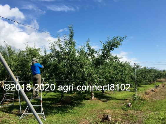 f:id:agri-connect:20200701093222j:plain