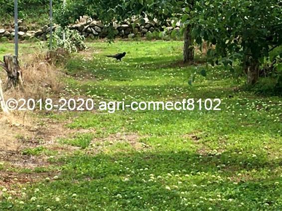 f:id:agri-connect:20200701093228j:plain