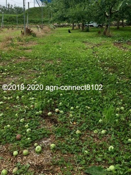 f:id:agri-connect:20200701093233j:plain