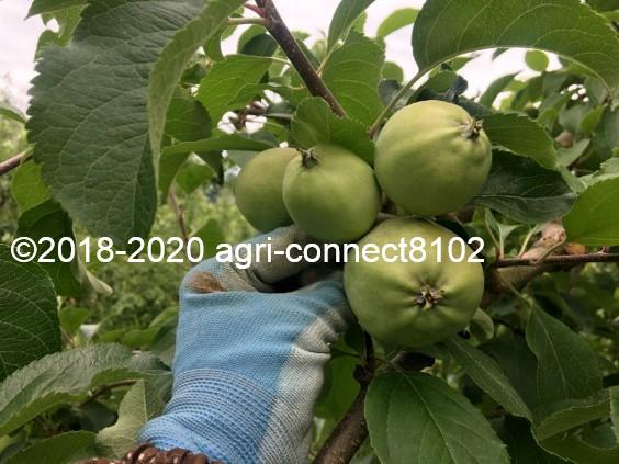 f:id:agri-connect:20200701094012j:plain