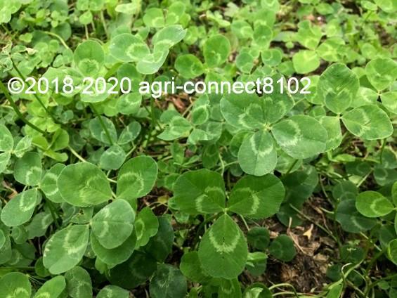 f:id:agri-connect:20200701094014j:plain