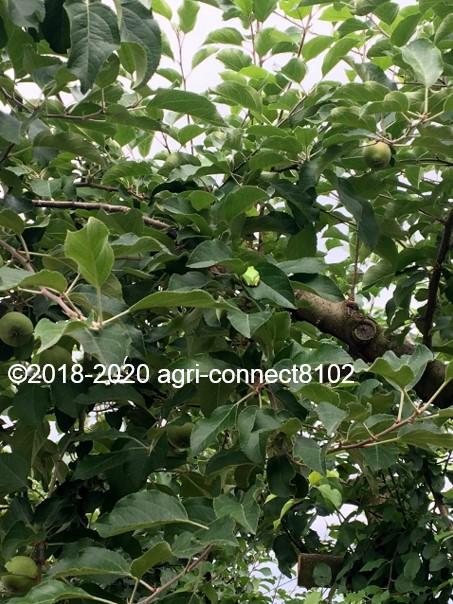 f:id:agri-connect:20200701095421j:plain