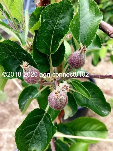 f:id:agri-connect:20200706155720j:plain