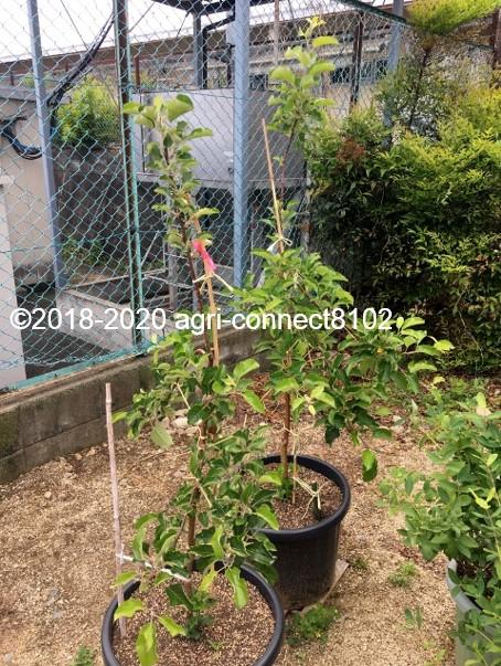 f:id:agri-connect:20200706155747j:plain