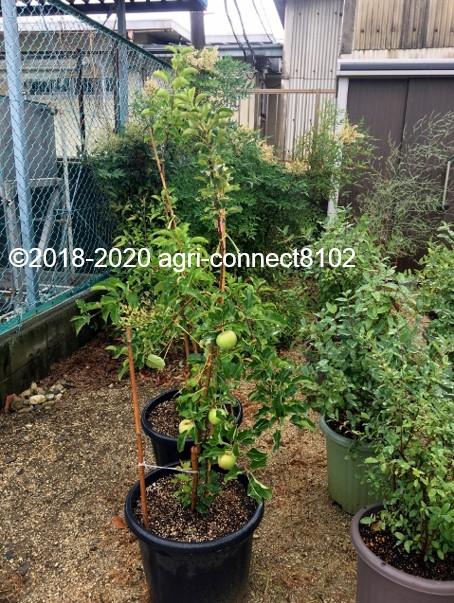 f:id:agri-connect:20200706160352j:plain
