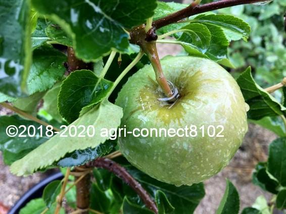 f:id:agri-connect:20200706161431j:plain