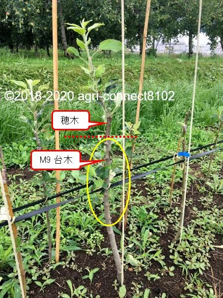 f:id:agri-connect:20200707200103j:plain