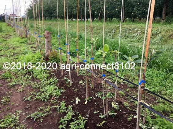 f:id:agri-connect:20200707200342j:plain