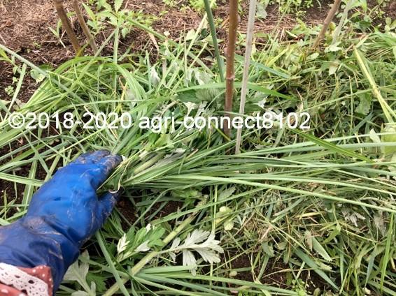 f:id:agri-connect:20200707200544j:plain