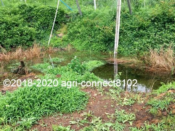 f:id:agri-connect:20200710110322j:plain
