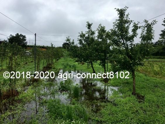 f:id:agri-connect:20200710113610j:plain