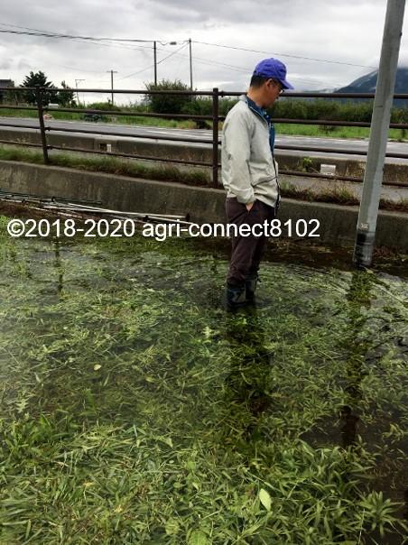 f:id:agri-connect:20200710114315j:plain