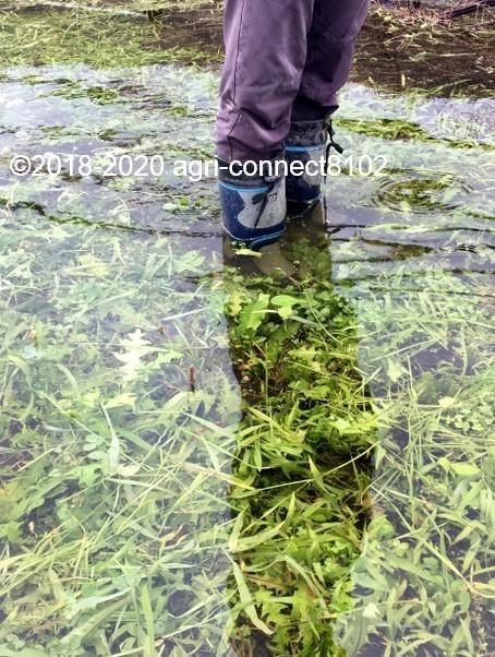 f:id:agri-connect:20200710114320j:plain