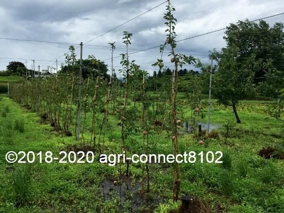 f:id:agri-connect:20200710124155j:plain