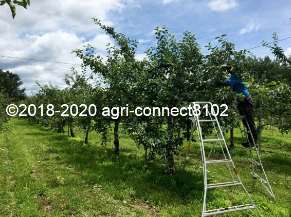 f:id:agri-connect:20200716225654j:plain